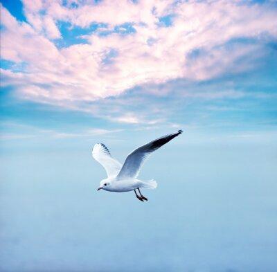Картина Чайка парящий против облаками небо