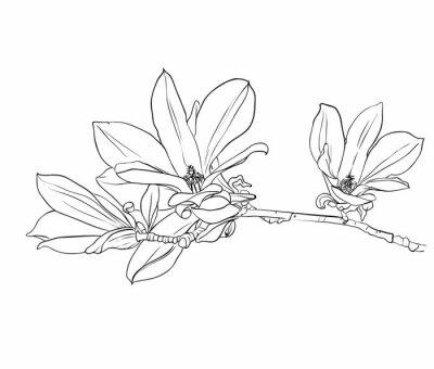 Картина Ручной обращается цветы магнолии.