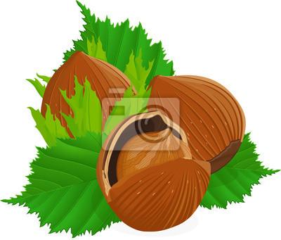 Фундук с листьями