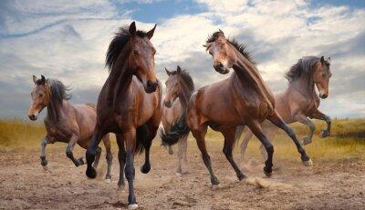 Картина herd of horses