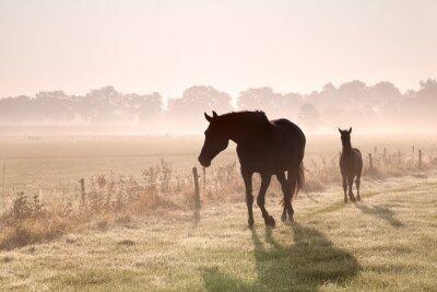 Картина лошадь и жеребенок силуэты в тумане