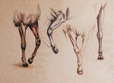 Картина лошади ноги исследование