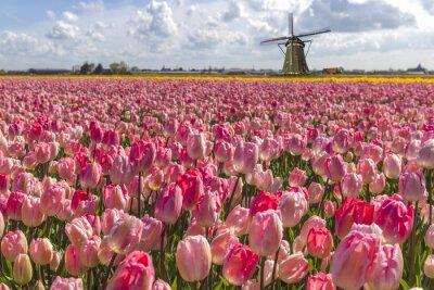 Картина Изобразительный голландских тюльпанов лампы фермы весной в Амстердаме