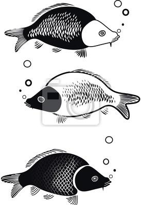 иллюстрация Карп