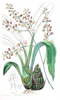 Картина Иллюстрация растения