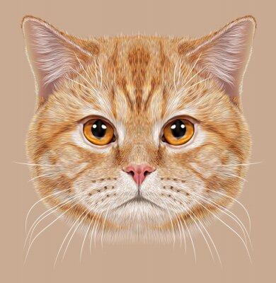 Картина Иллюстрация Портрет британской кошки короткие волосы. Симпатичные оранжевый Домашняя кошка с медными глазами.