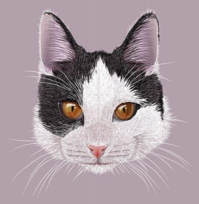 Картина Иллюстрация Портрет домашней кошки. Симпатичные молодые двухцветные кот с оранжевыми глазами.