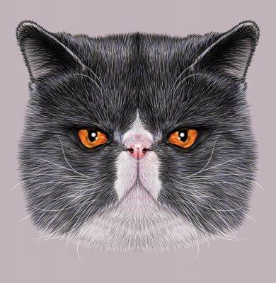 Картина Показательный Портрет Мейн-кун. Симпатичные двухцветные домашняя кошка с зелеными глазами.