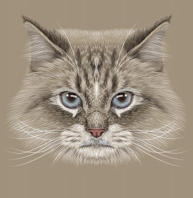 Картина Показательный Портрет сибирской кошки. Симпатичные Внутренний цвет точки Кошка с голубыми глазами.