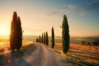 Картина Италия Тоскана сельской местности холмистой местности; летние сельхозугодья и проселочная дорога;