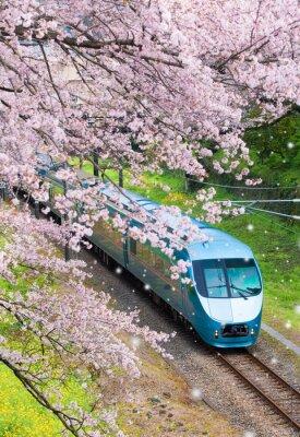 Картина Япония поезда в сакура вишневый цвет моря в городе Ямакита, префектура Канагава