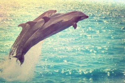 Картина прыжки дельфинов