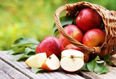 Картина Корзина со свежими яблоками