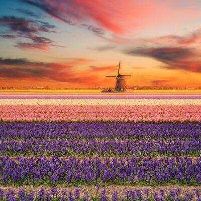 Картина Пейзаж с полями Гиацинте