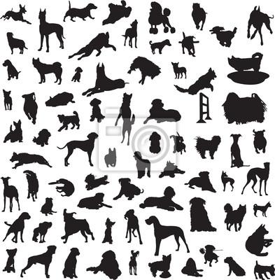 Большая коллекция различных силуэтов собак