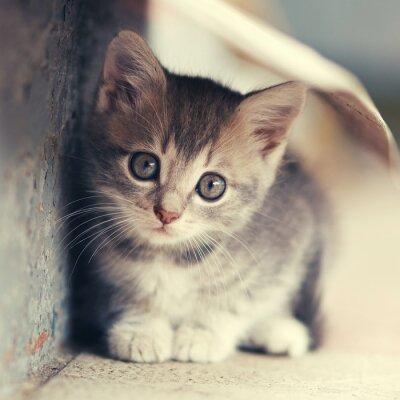 Картина Маленький милый котенок размещения на открытом воздухе