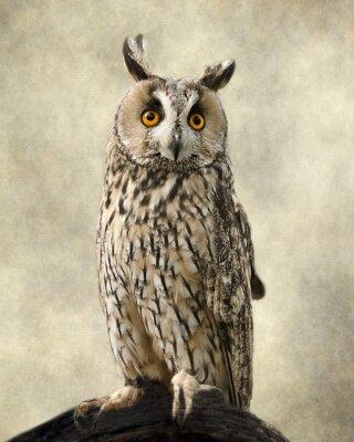 Картина Ушастая сова, текстуры добавил вывести красоту совы.