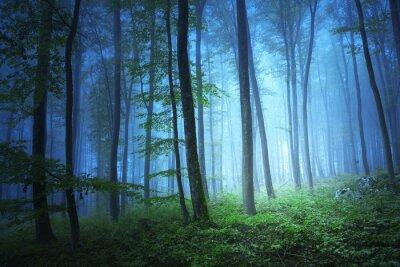 Картина Магия синий цвет свет в мистической Форрест
