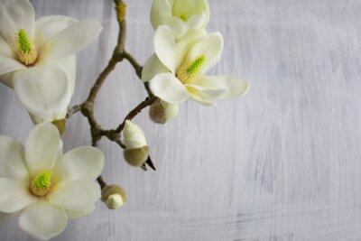 Картина Magnolia Flower blossom