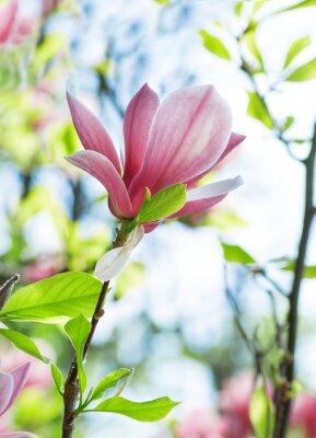 Картина цветы магнолии в парке