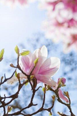 Картина Magnolienblüte