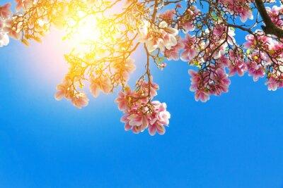 Картина Magnolienblüten ин-дер-Sonne