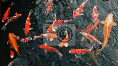 многие карповые рыбы