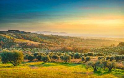 Картина Maremma sunset panorama. Countryside, sea and Elba on horizon. San Vincenzo, Tuscany, Italy.