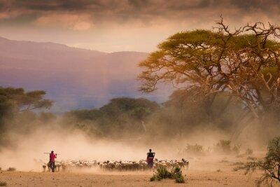 Картина Масаи Пастухи со стада коз ог