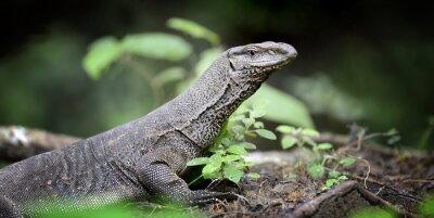 Картина монитор Lizard