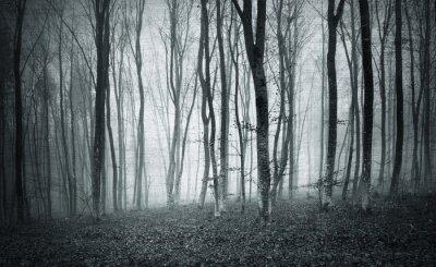 Картина Монохромный черно-белый гранж текстурированной цвет туманной мистические лесные деревья пейзаж.