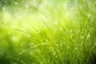Картина Утренняя роса на траве весенний
