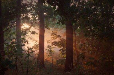 Картина Утренний туман в лесу