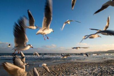 Картина Mowen им Флуг Ostseeküste Binz Deutschland