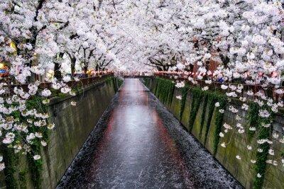 Картина Nakameguro Kanal в Токио während дер Kirschblüte им-Frühling