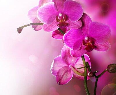 Картина Цветок орхидеи границы дизайн