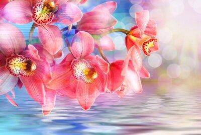 Картина Цветок орхидеи крупным планом