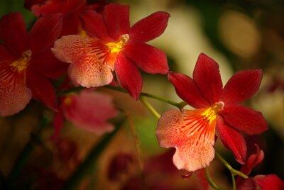 Картина Orchidées à Fleurs румяна и др JAUNE