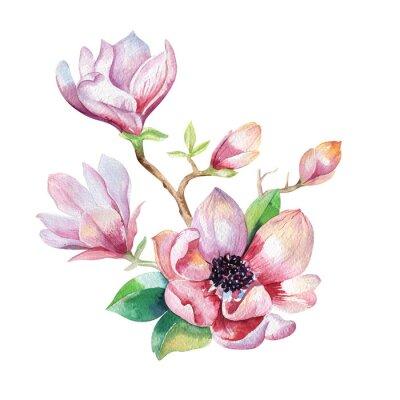 Картина Картина цветок магнолии обои. Ручной обращается цветочные Акварель