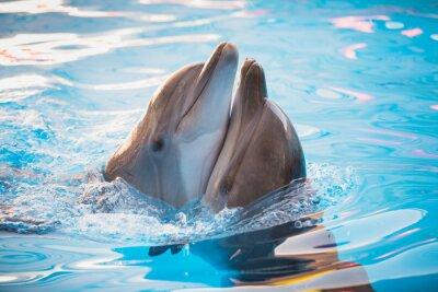 Картина пара дельфинов, танцующих в воде