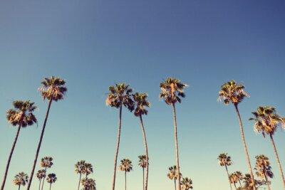 Картина Palm Trees in Retro Style