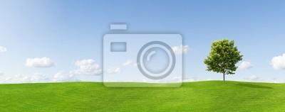 Панорама клена на лугу против голубого неба