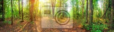 Панорама смешанном лесу на летний Солнечный день