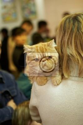 Картина Родословная кот