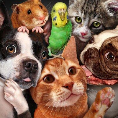 Картина Домашние животные Группа