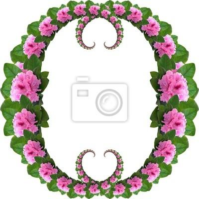 розовый рододендрон кадров