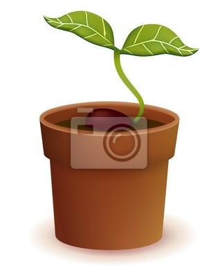 Жизнь растений цикла - векторный файл EPS10