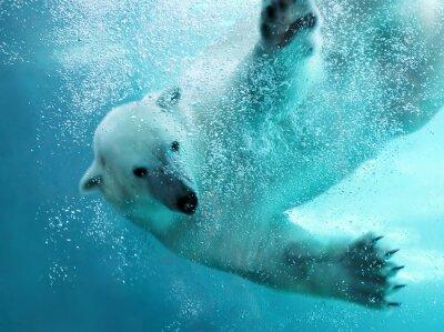 Картина Белый медведь под водой атака