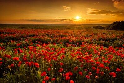 Картина Маковое поле на закате