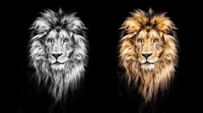 Картина Портрет красивый лев, лев в темноте, масляных красок